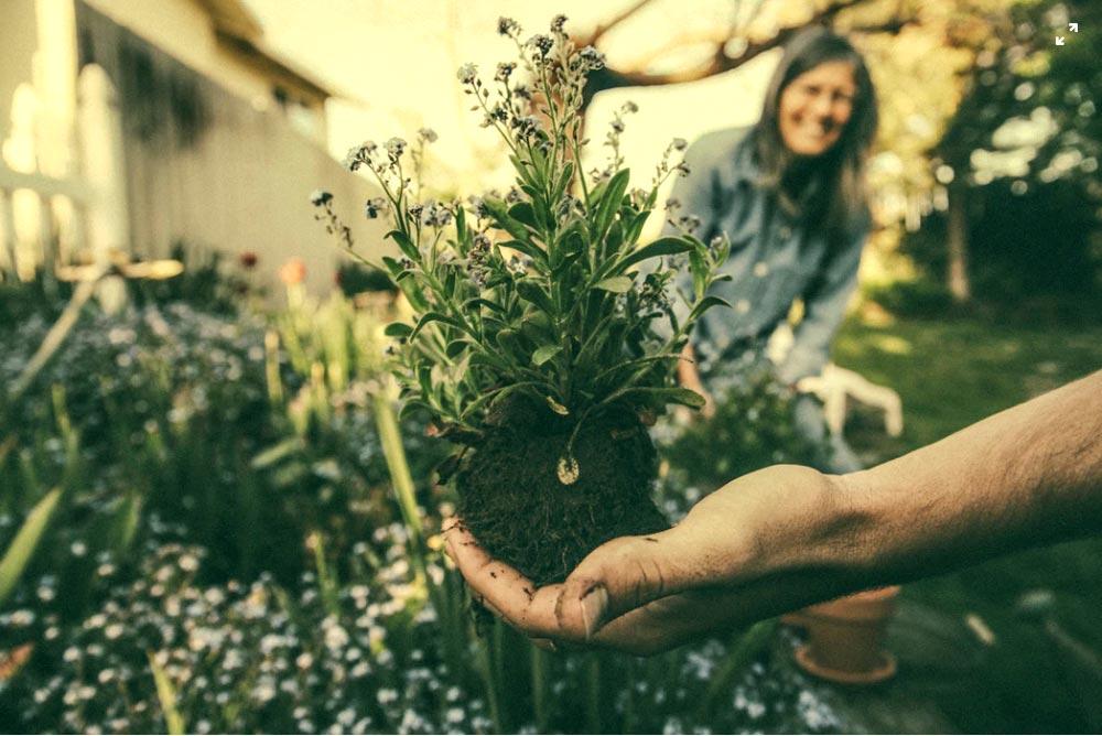 Comment prendre soin de son jardin?