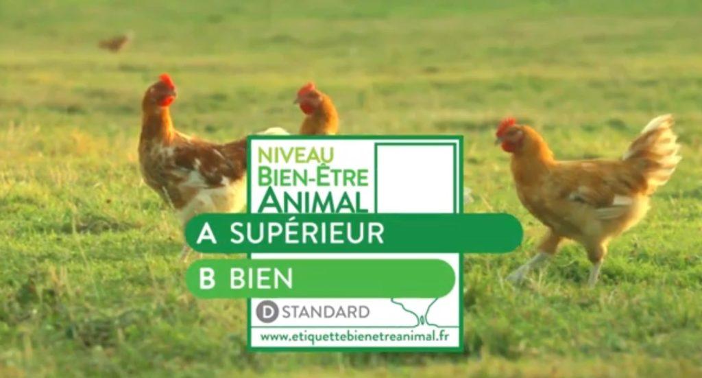 Vers l'étiquetage généralisé pour le bien-être animal ?