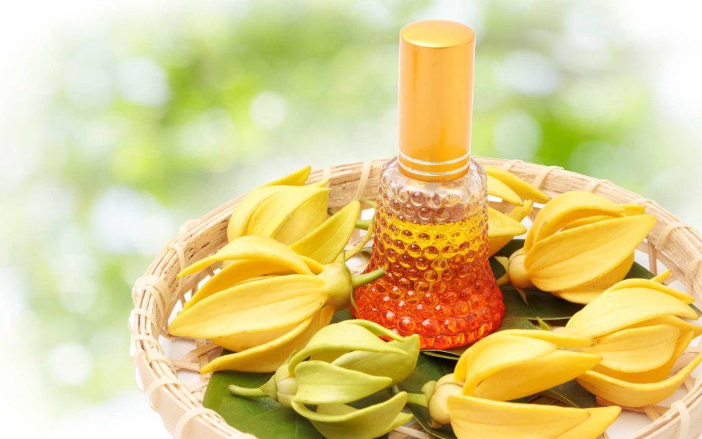 L'huile d'ylang-ylang : des propriétés essentielles à votre santé